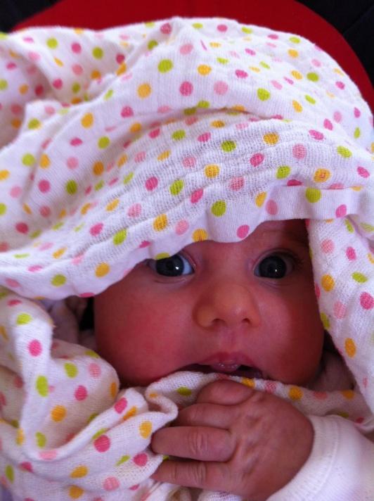 Hili as a new born